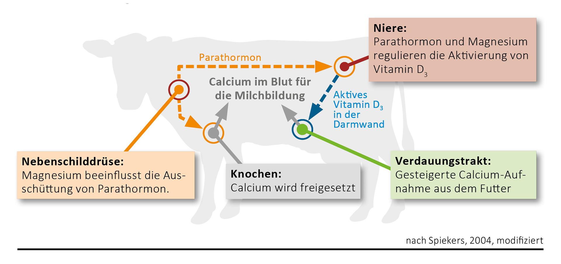 Magnesium - ein unterschätzter Baustein